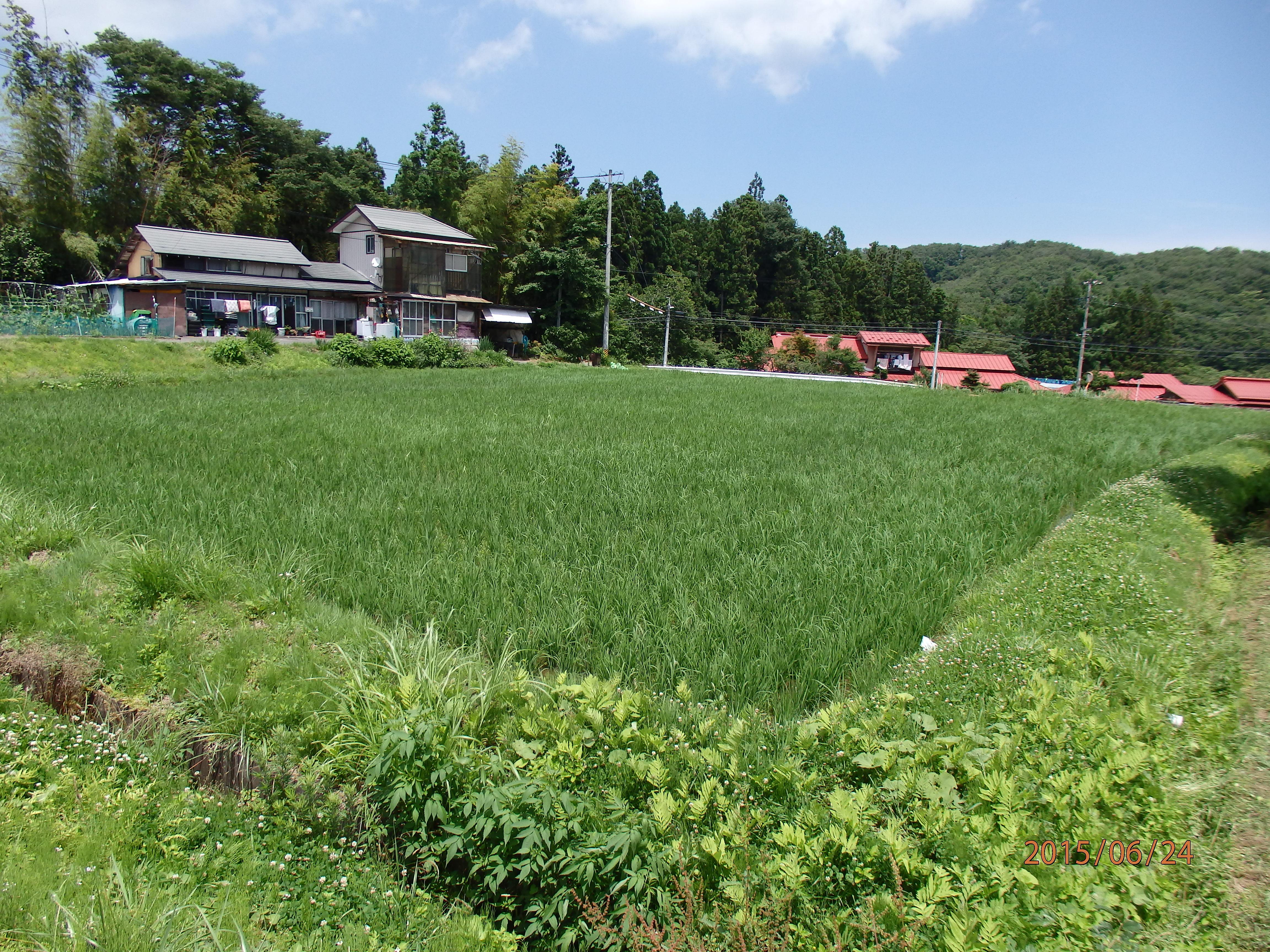 【みらいファームやまと】米づくりの様子